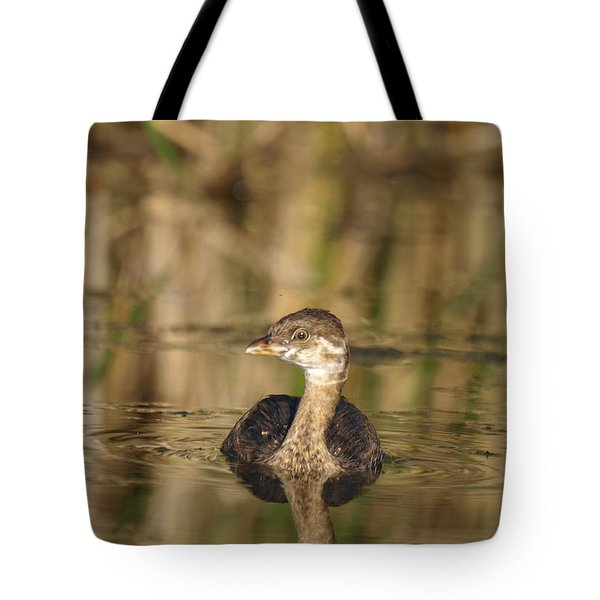 Tote Bag featuring the photograph Juvenile Pied-billed Grebe by James Peterson