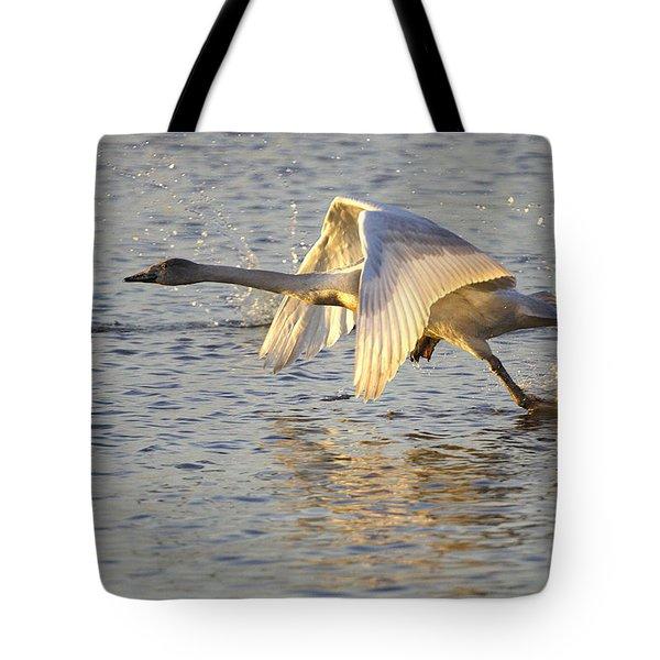 Juvenile Whooper Swan Taking Off Tote Bag