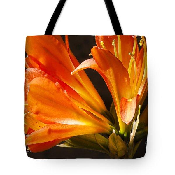 Kaffir Lily Glow Tote Bag