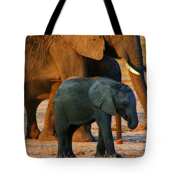 Tote Bag featuring the photograph Kalahari Elephants by Amanda Stadther
