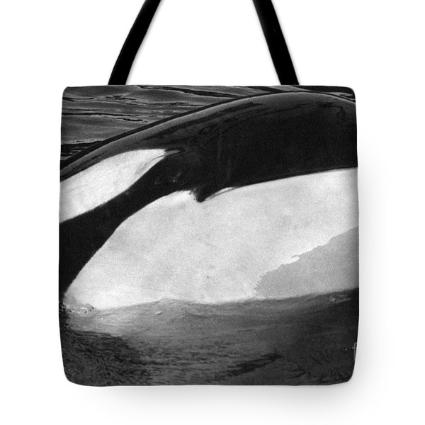 Kandu Orca Seattle Aquarium 1969 Pat Hathaway Photo Killer Whale Seattle Tote Bag by California Views Mr Pat Hathaway Archives