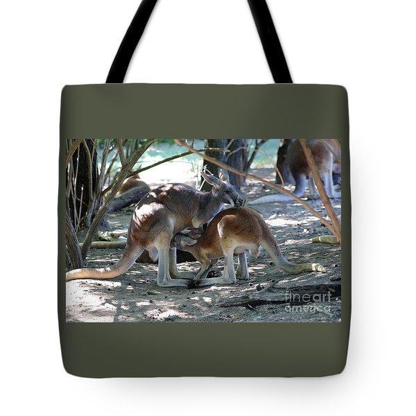 Kangaroo Nurse-6 Tote Bag by Gary Gingrich Galleries