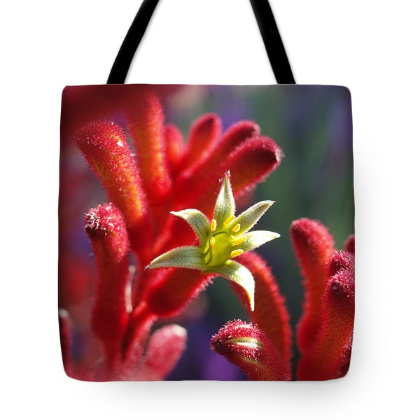 Kangaroo Star Tote Bag by Evelyn Tambour