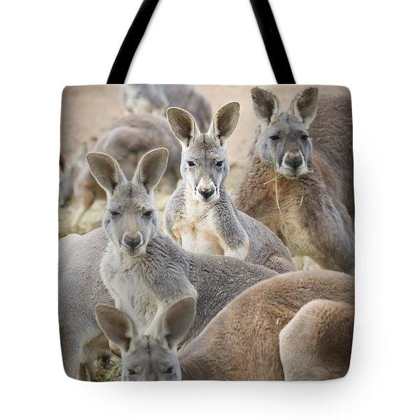 Kangaroos Waga Waga Australia Tote Bag by Jim Julien