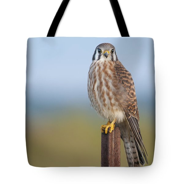 Kestrel On Metal Post Tote Bag