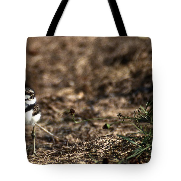 Killdeer Chick Tote Bag