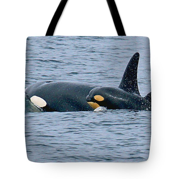 Tote Bag featuring the photograph Killer Whale Mother And New Born Calf Orcas In Monterey Bay 2013 by California Views Mr Pat Hathaway Archives