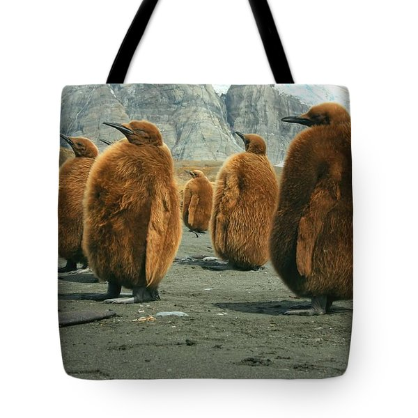 King Penguin Chicks Tote Bag by Amanda Stadther