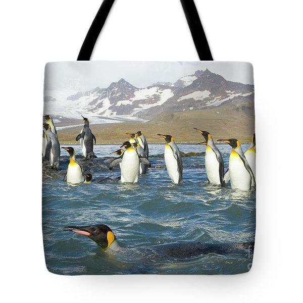 King Penguins Swimming St Andrews Bay Tote Bag by Yva Momatiuk John Eastcott