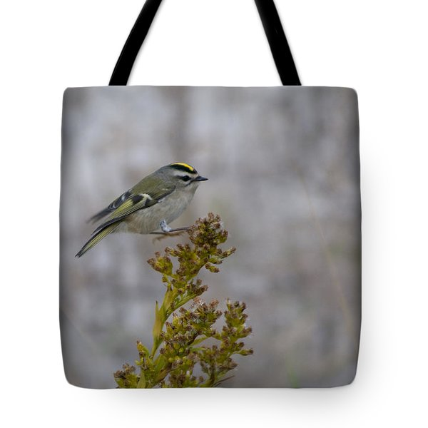 Tote Bag featuring the photograph Kinglet by Greg Graham