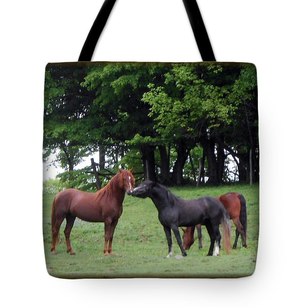 Kissing Cousins- The Paso Fino Stallions Tote Bag by Patricia Keller