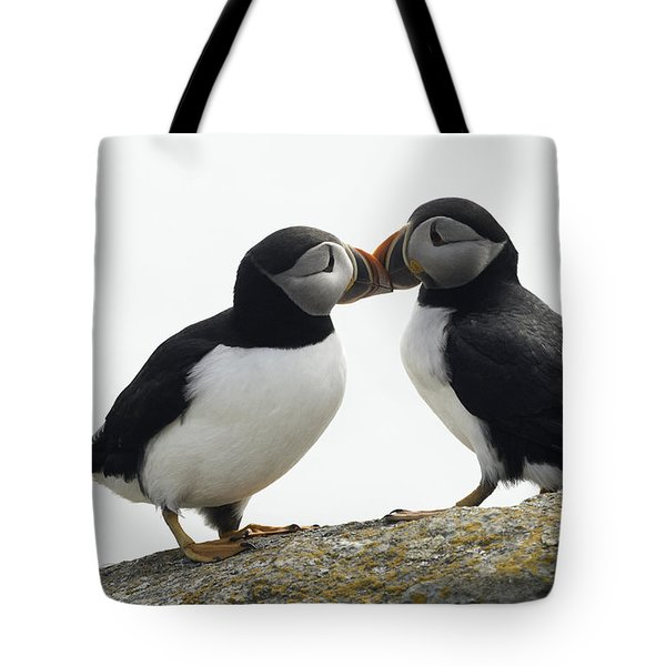 Kissing Puffins Tote Bag by Jim  Hatch
