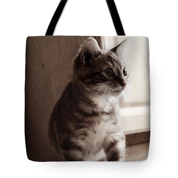 Tote Bag featuring the photograph Kitten In The Light by Melanie Lankford Photography