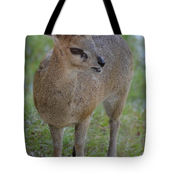 Klipspringer Tote Bag by Richard Bryce and Family
