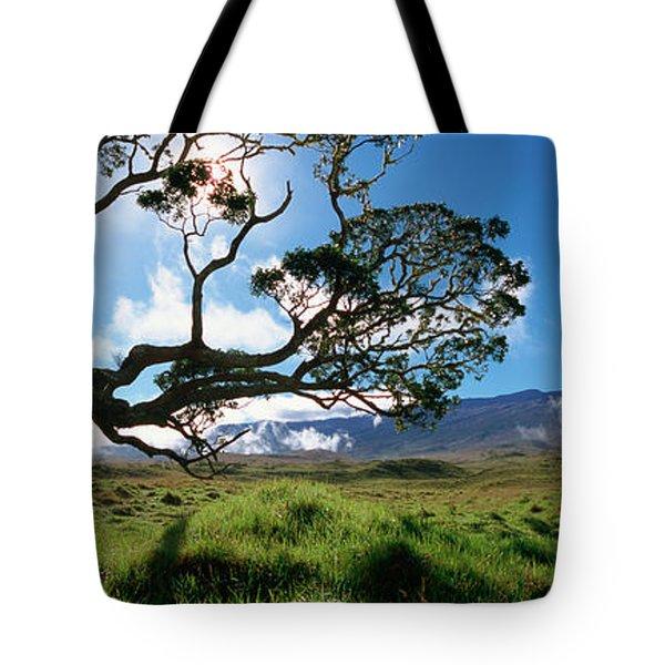 Koa Tree On A Landscape, Mauna Kea, Big Tote Bag
