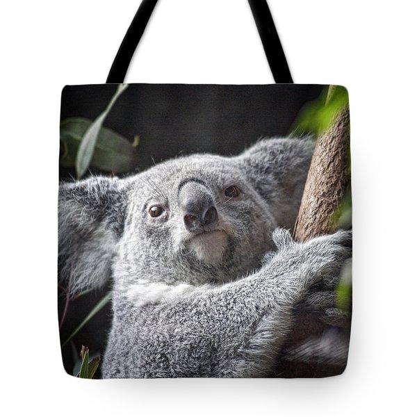Koala Bear Tote Bag by Tom Mc Nemar