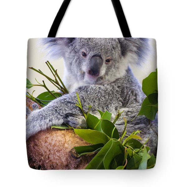 Koala On Top Of A Tree Tote Bag by Chris Flees