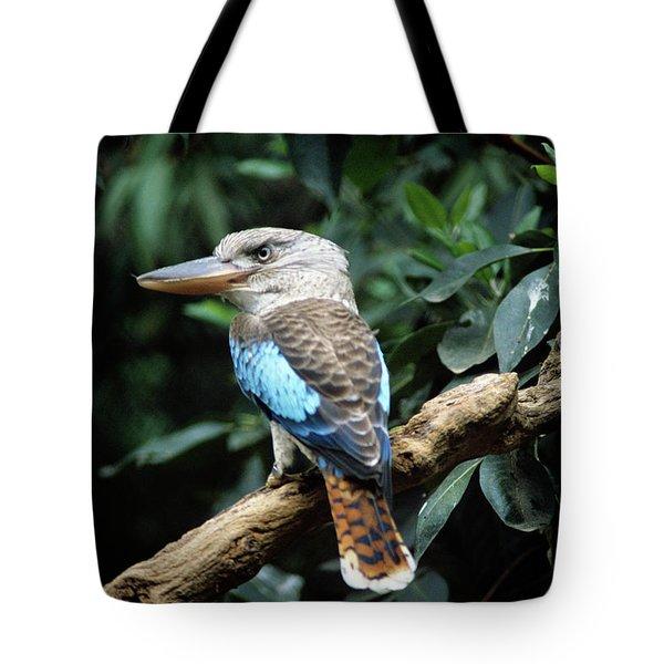 Kookaburra Dacelo Leachii Female Tote Bag