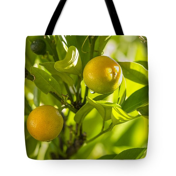 Kumquats Tote Bag