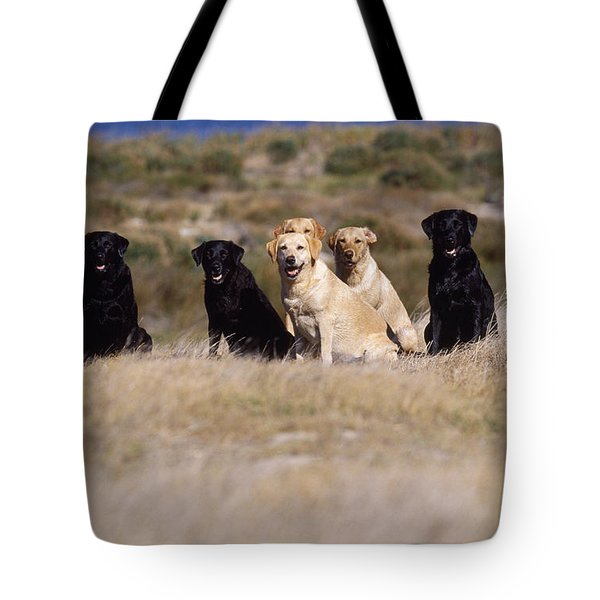 Labrador Dogs Waiting For Orders Tote Bag by Chris Harvey