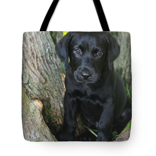 Labrador Retriever Puppy Tote Bag by Catherine Reusch Daley