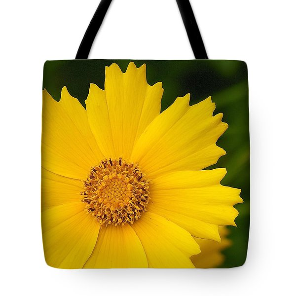 Tote Bag featuring the photograph Lance-leaved Coreopsis - Coreopsis Lanceolata by Nature and Wildlife Photography