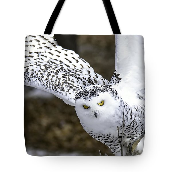 Landing Of The Snowy Owl Where Are You Harry Potter Tote Bag by LeeAnn McLaneGoetz McLaneGoetzStudioLLCcom