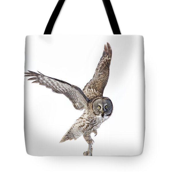 Lapland Owl On White Tote Bag by Mircea Costina Photography