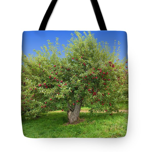 Large Apple Tree Tote Bag