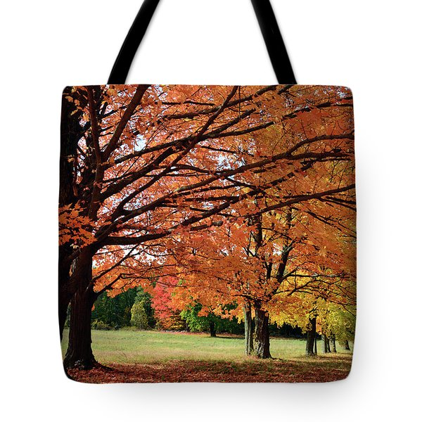 Large Sugar Maple Trees, Acer Tote Bag