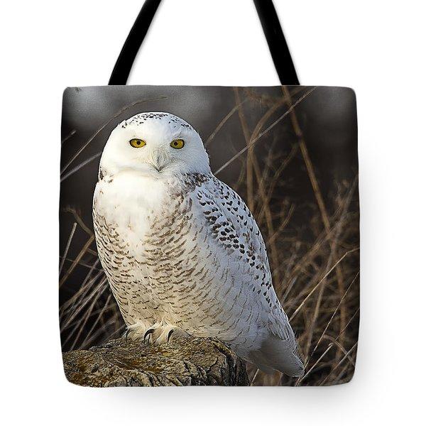 Late Season Snowy Owl Tote Bag