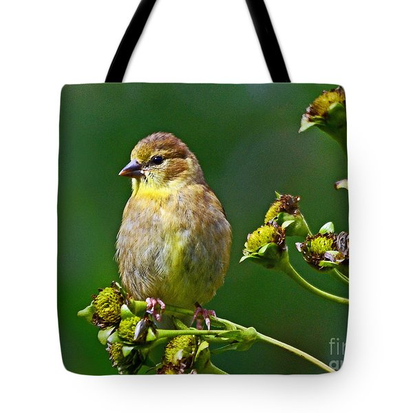 Late Summer Finch Tote Bag