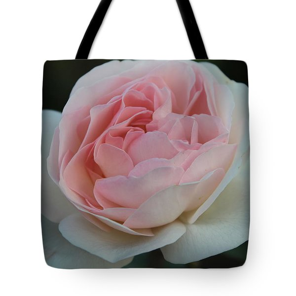 Tote Bag featuring the photograph Late Summer's Rose by Patricia Hiltz