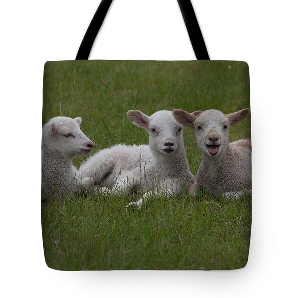 Laughing Lamb Tote Bag by Richard Baker