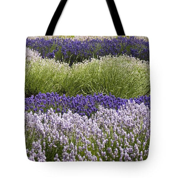 Lavender Bands Tote Bag by Anne Gilbert