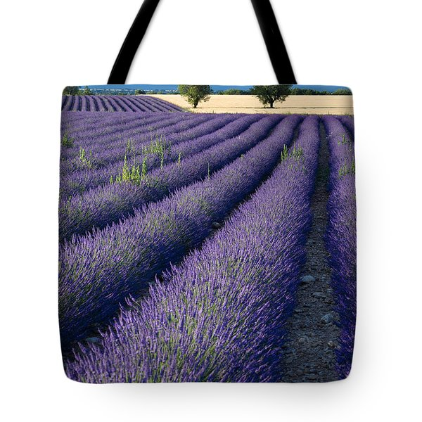 Lavender Fields Tote Bag by Brian Jannsen