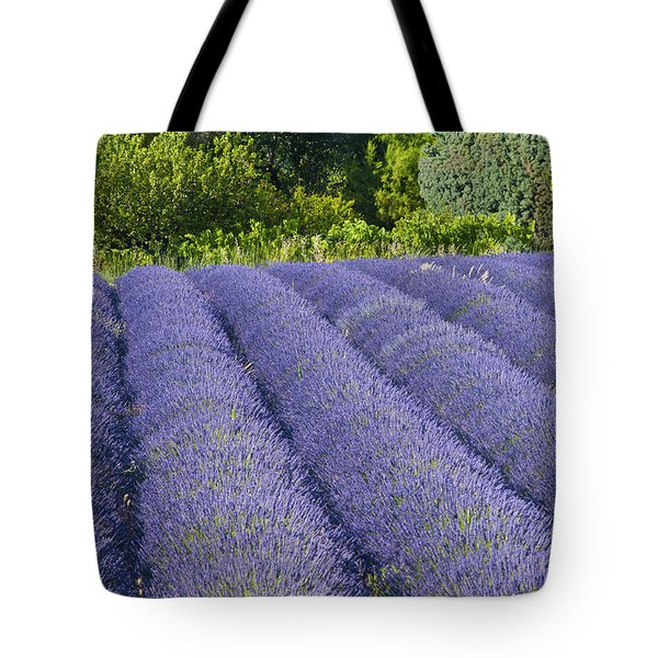 Lavender Rows Tote Bag by Bob Phillips