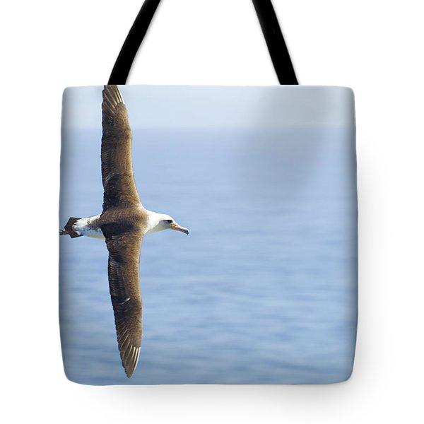 Laysan Albatross No 1 - Kilauea - Kauai - Hawaii Tote Bag