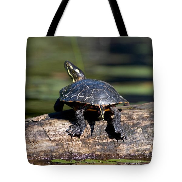 Lazy Day On A Log 6241 Tote Bag by Brent L Ander