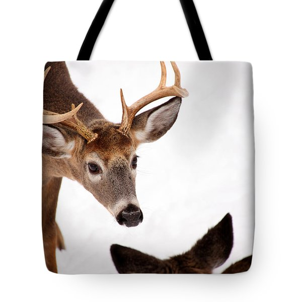 Learning A Lesson Tote Bag by Karol Livote