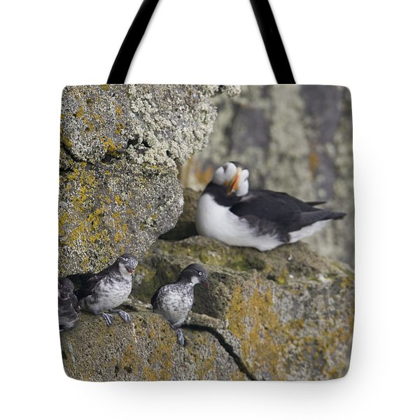 Least Auklets Perched On A Narrow Ledge Tote Bag by Milo Burcham