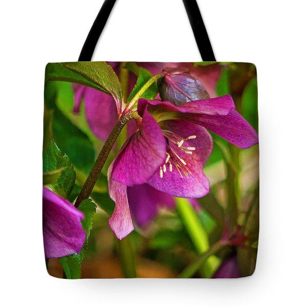 Tote Bag featuring the photograph Lenten Rose by Jordan Blackstone
