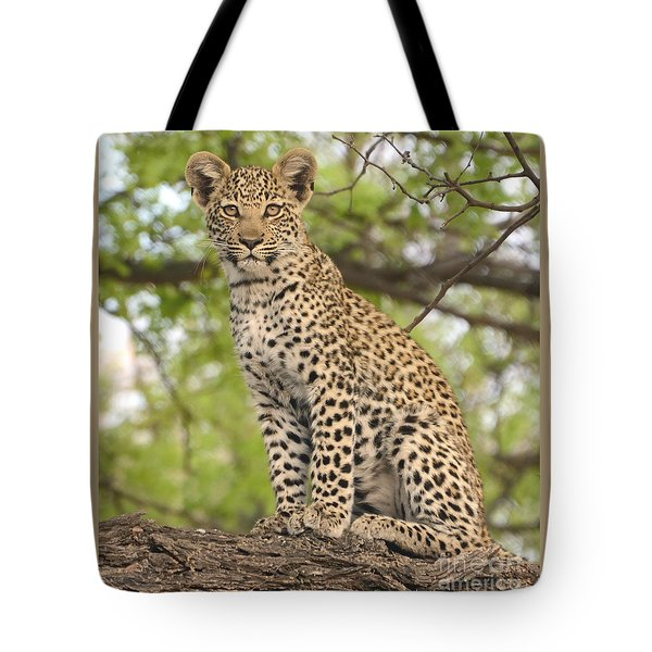 Leopard Cub Gaze Tote Bag by Tom Wurl
