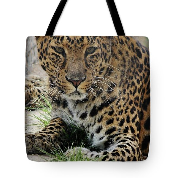 Leopard Lounging 1 Tote Bag