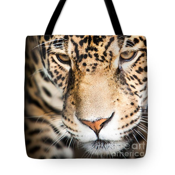 Leopard Resting Tote Bag by John Wadleigh