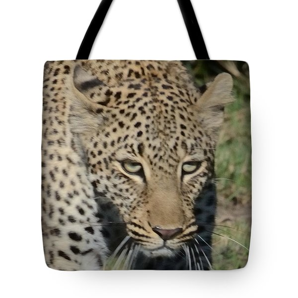 Tote Bag featuring the photograph Leopard Stalking by Tom Wurl