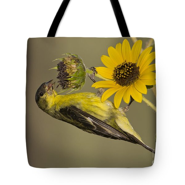 Lesser Goldfinch On Sunflower Tote Bag