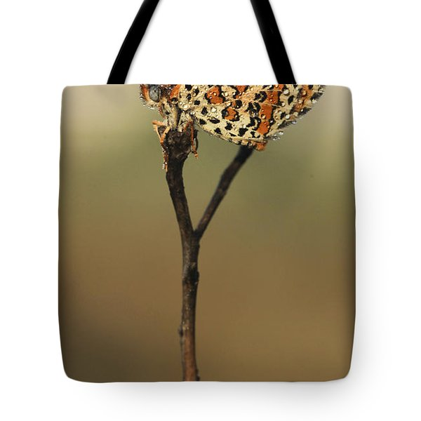 Lesser Spotted Fritillary Tote Bag by Alon Meir