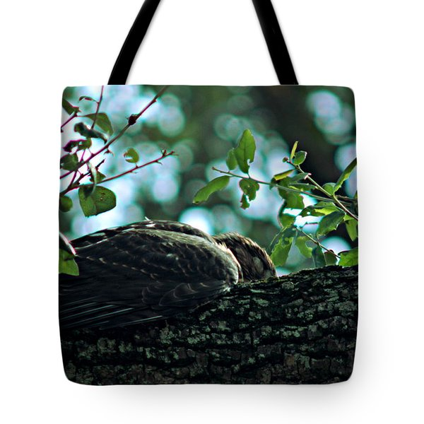 Let Sleeping Hawks Lie Tote Bag