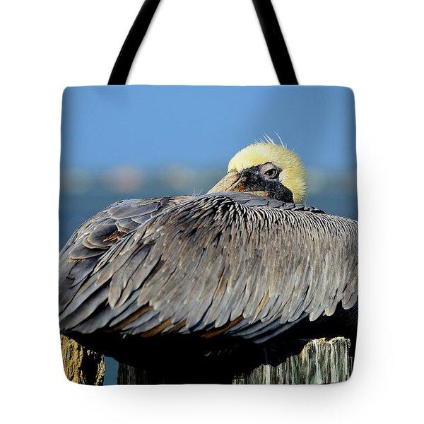 Let Sleeping Pelicans Lie Tote Bag